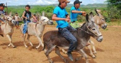 Corrida de Jumentos anima comunidade em Maranguape